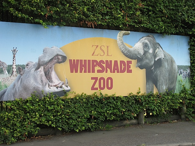 whipsnade-zoo