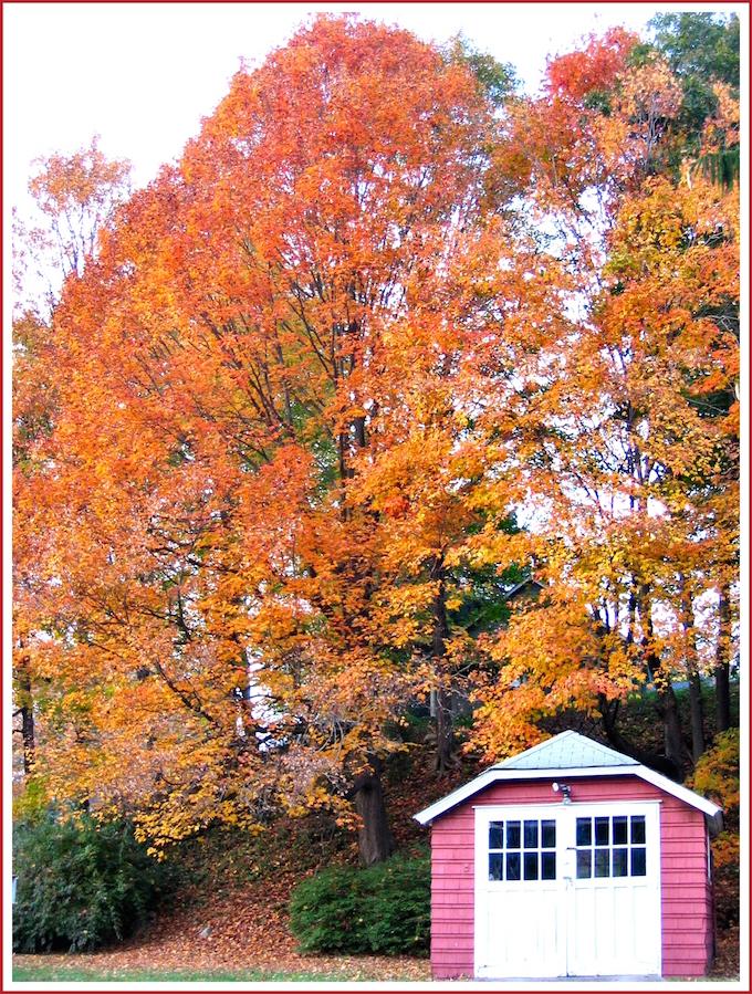 Connecticut Fall Colour
