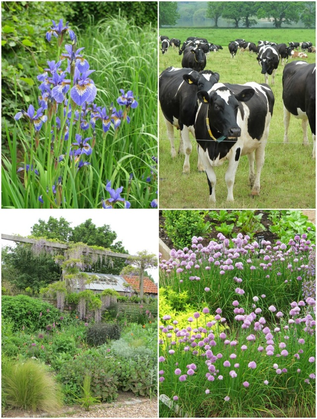 Yeo Valley collage 3