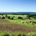 Franche Comte in France's Jura mountains - and The cows who keep the wheels of Comte cheese turning